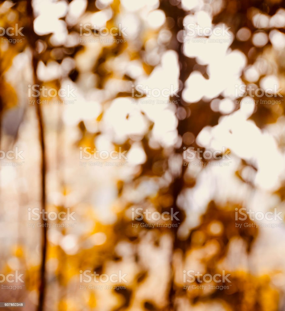 Abstract illuminated lights blurred background photo stock photo