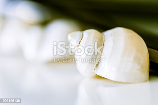 istock Abstract Image of a SeaShell 509196136
