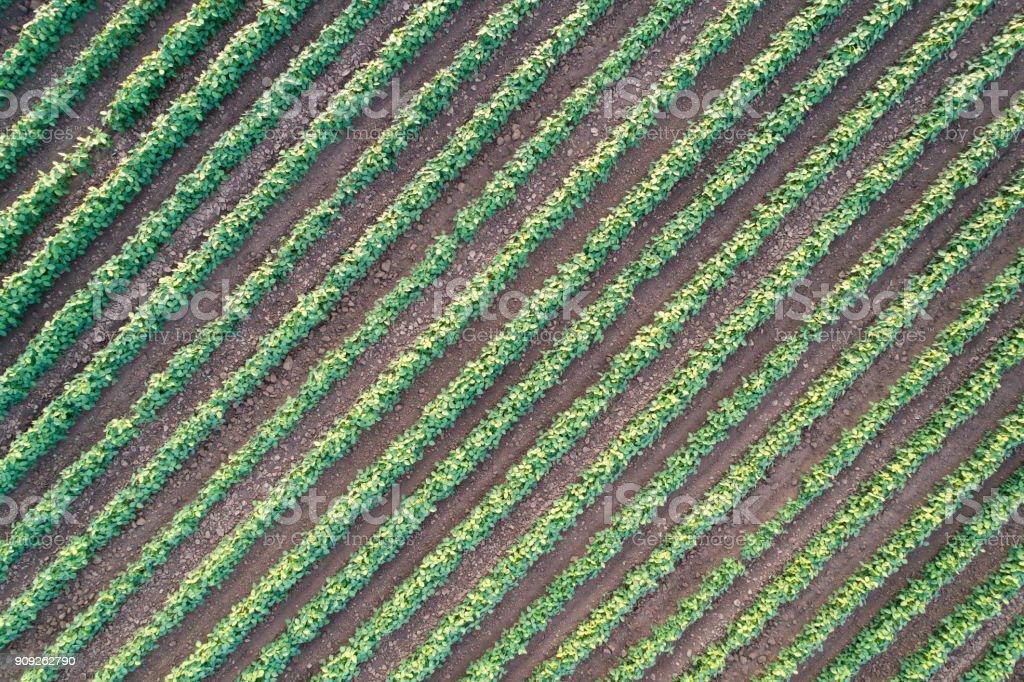 Abstraktes Bild von landwirtschaftlichen Bereich – Foto
