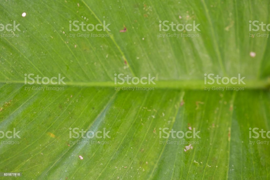 abstract image of fresh Green Palm leaves stock photo