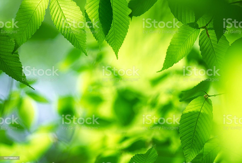 Abstract image of leaves royalty-free stock photo