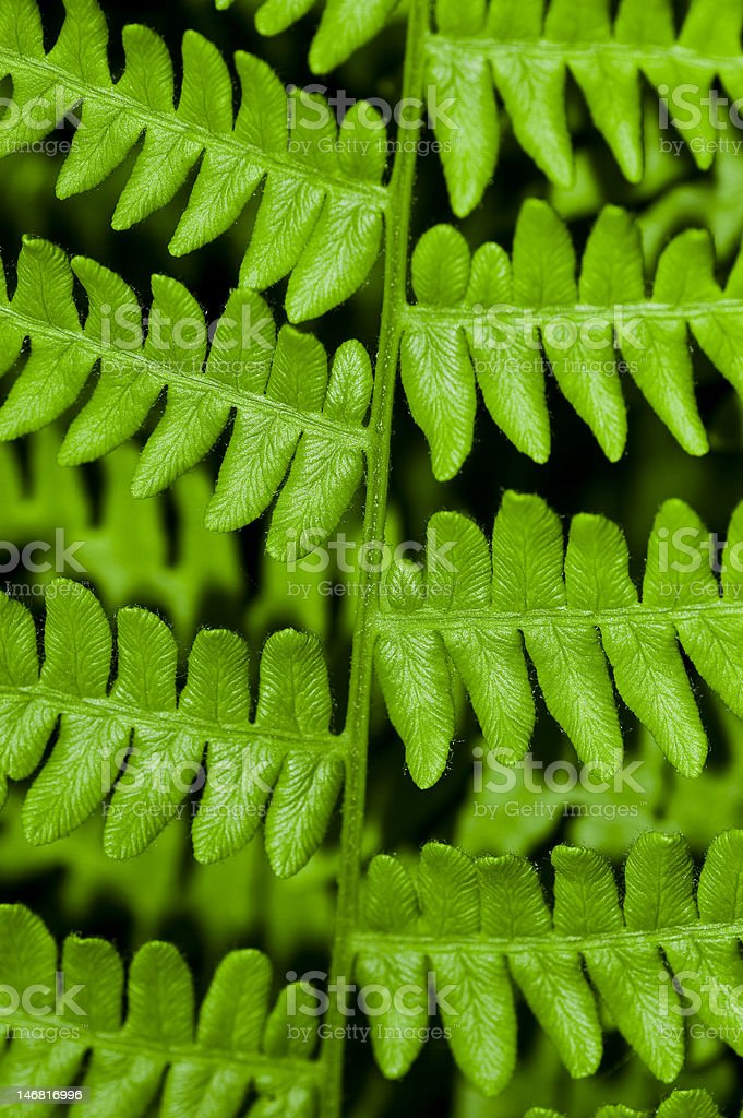 Abstract Leaf Background stock photo