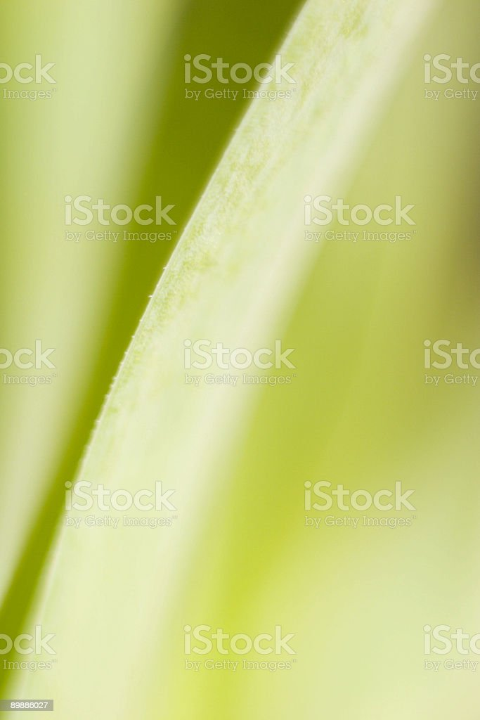 Abstract Leaf IV royalty free stockfoto