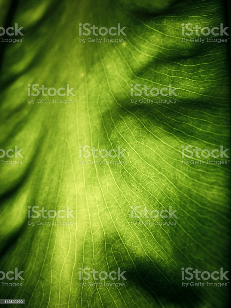 Abstract leaf royalty-free stock photo