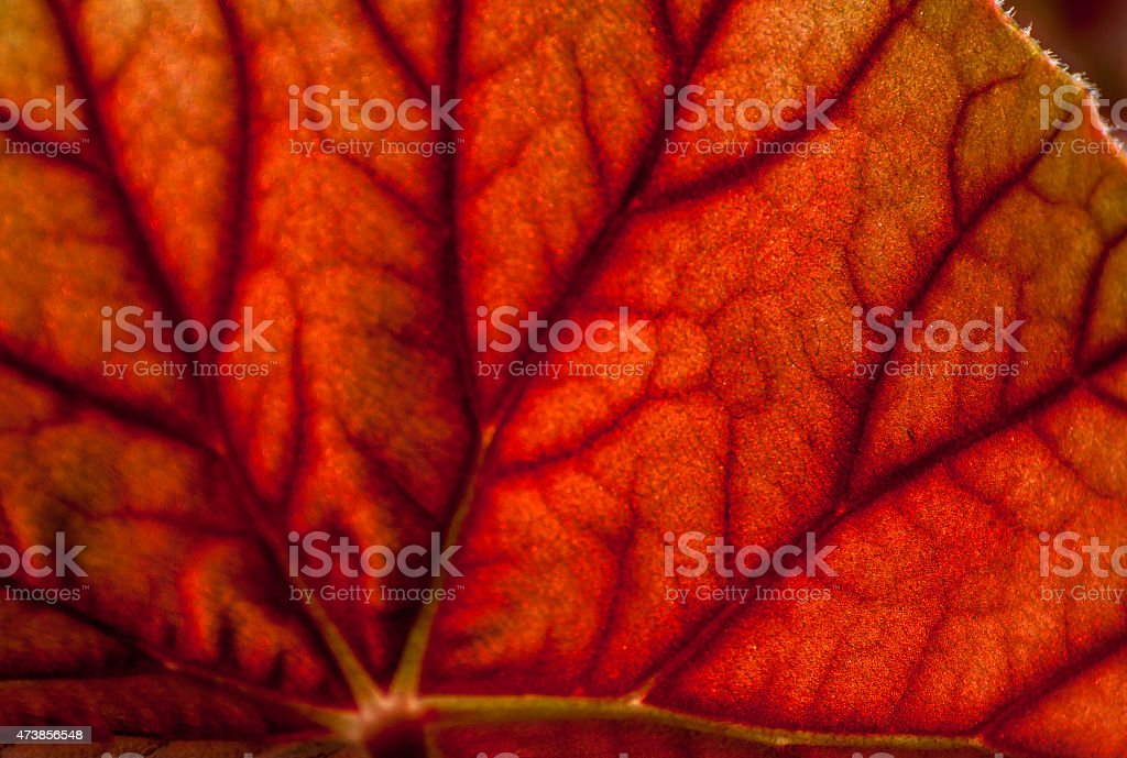 Abstract Leaf stock photo