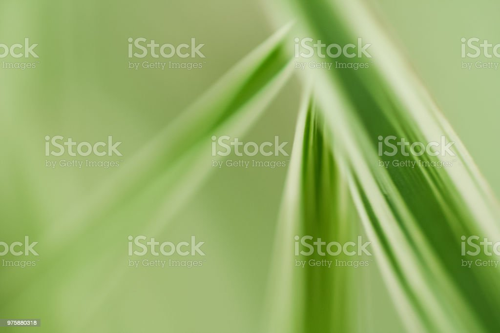Abstract Leaves stock photo