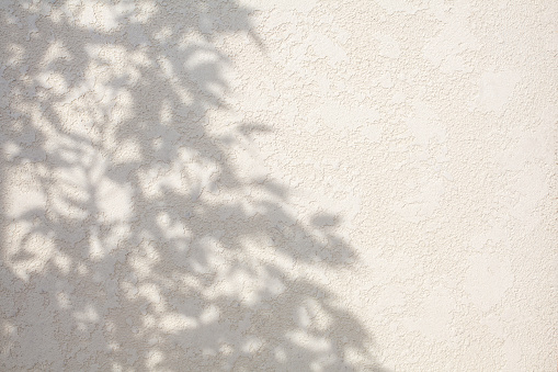 Abstract leaves shadow background on white concrete wall texture, nature shadow art on wall. White cement wall texture background. Natural light.