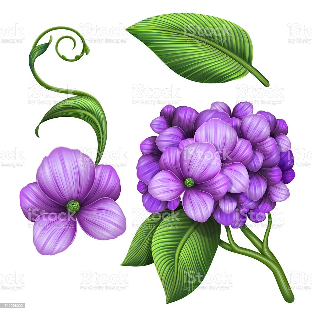 royalty free clip art of a hydrangea flowers pictures images and rh istockphoto com hydrangea clip art border free hydrangea clipart free