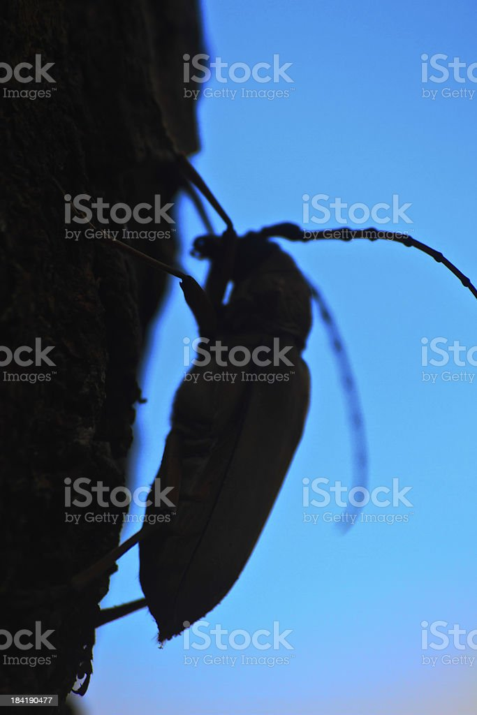 Abstract Long Horned Beetle on tree stock photo