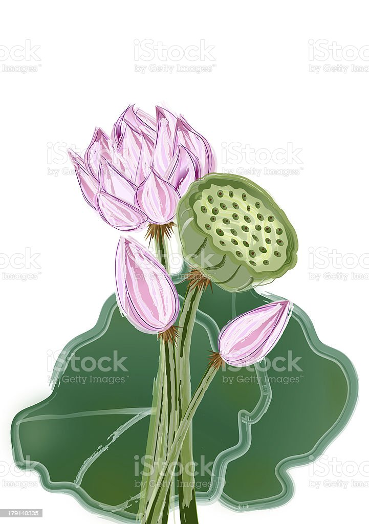 Abstract Lotus flower and seed royalty-free stock photo