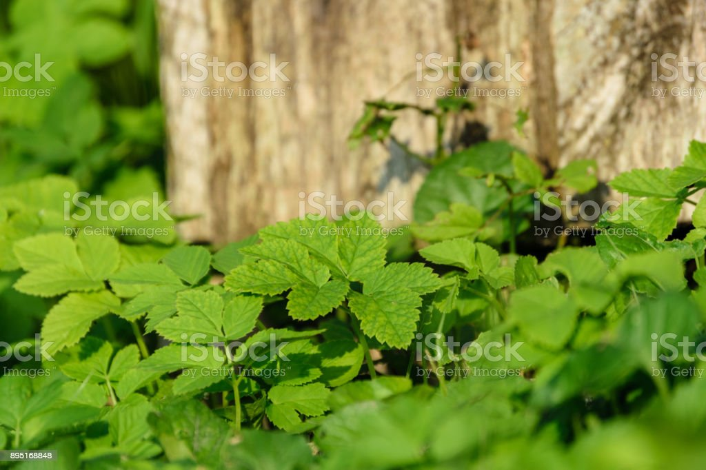 abstract lush of summer flowers and bents in evening sun stock photo