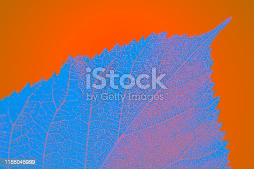 istock Abstract macro leaves background texture 1155045999