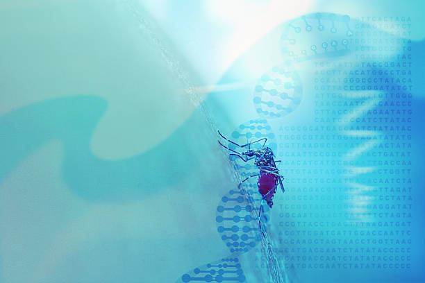 abstract medical background with dna helix, genetic code and mos - virus zika foto e immagini stock