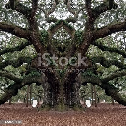 Abstract Mirror Collage of Angel Oak Tree