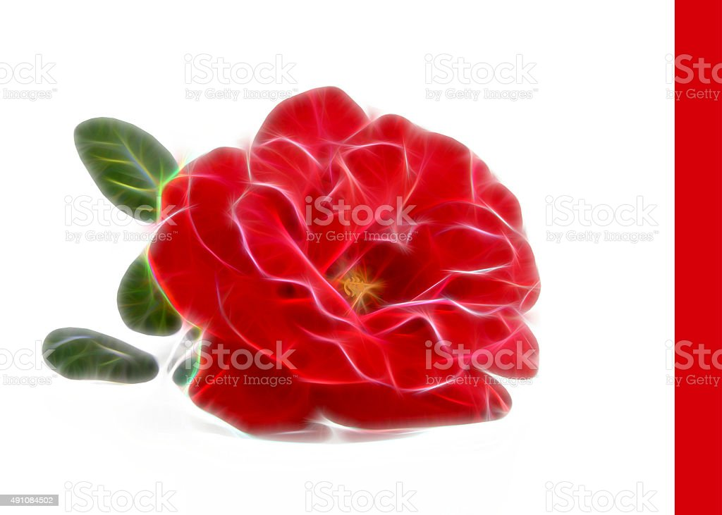 abstract modern illustration red rose on a white background stock photo