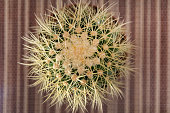 Abstract natural background, top view of cactus in a pot on the desk. Blurred background, close up and selective focus
