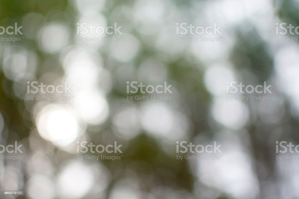 Abstract natural green bokeh from tree forest background zbiór zdjęć royalty-free