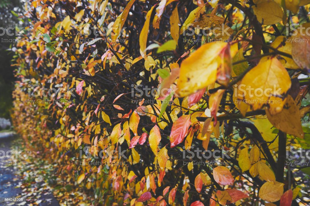 Abstract natural nature background in autumn. royalty-free stock photo