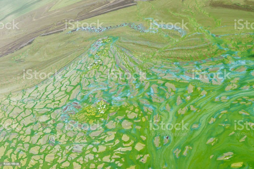 Abstract natural patterns on Ukrainian river Dnepr covered by cyanobacterias as a result of phytoplankton evolution in hot seasons stock photo