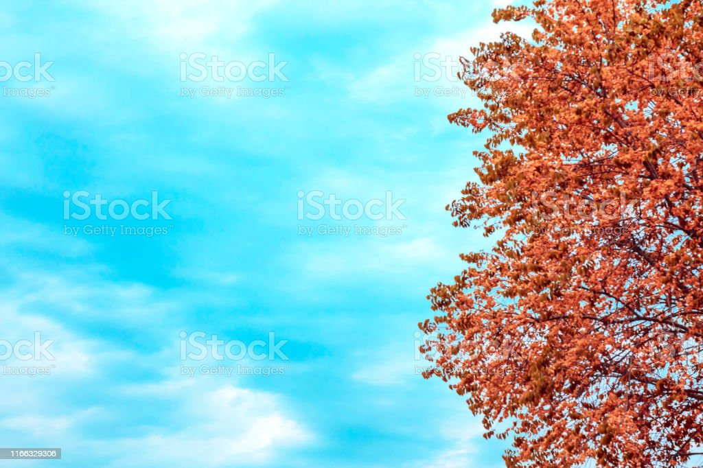 Abstract natural seasonal autumn background with mine space. Tree...