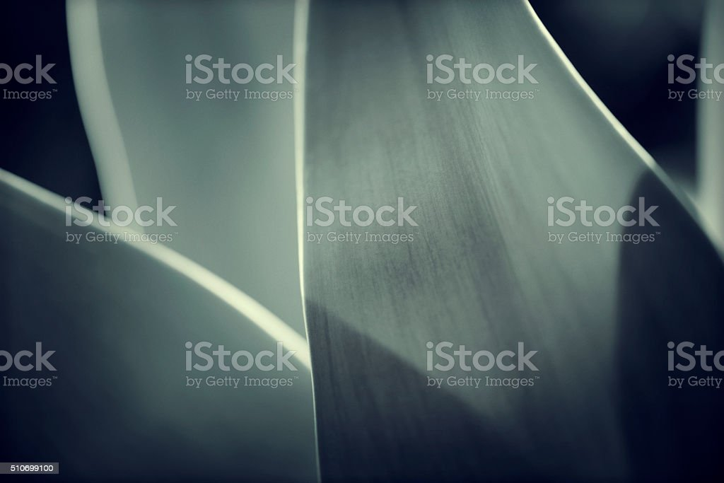 Abstract nature / agave background stock photo