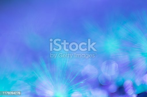 157681198 istock photo Abstract nature background image, Dandelion seed extreme close-up, macrophotography, with copy space, no people 1179264276