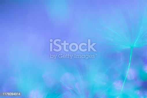 Abstract nature background image, Dandelion seed extreme close-up, macrophotography, with copy space, no people