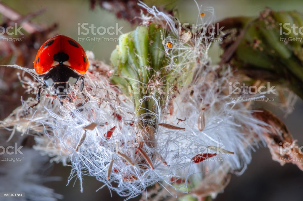 Abstract nature background of grass and ladybug royalty-free stock photo