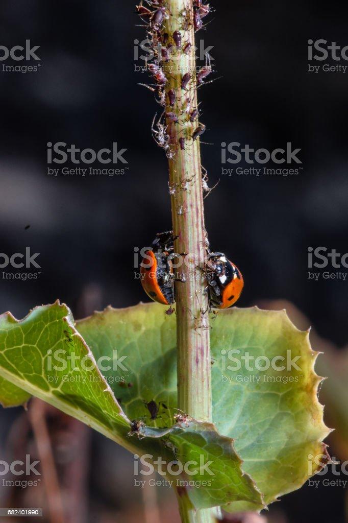 Nature abstraite fond d'herbe, coccinelle et petites araignées photo libre de droits