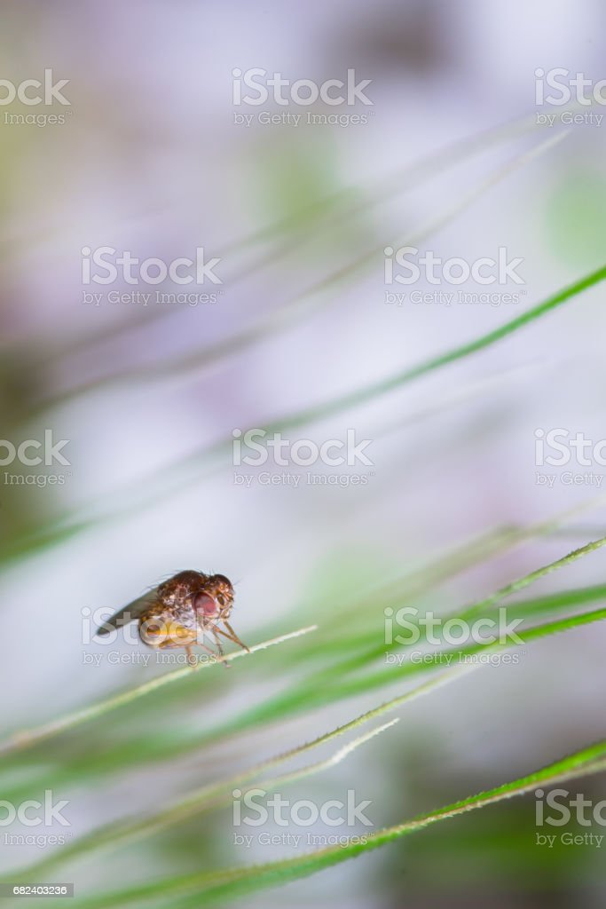 Abstract nature background of plant and fly royalty-free stock photo