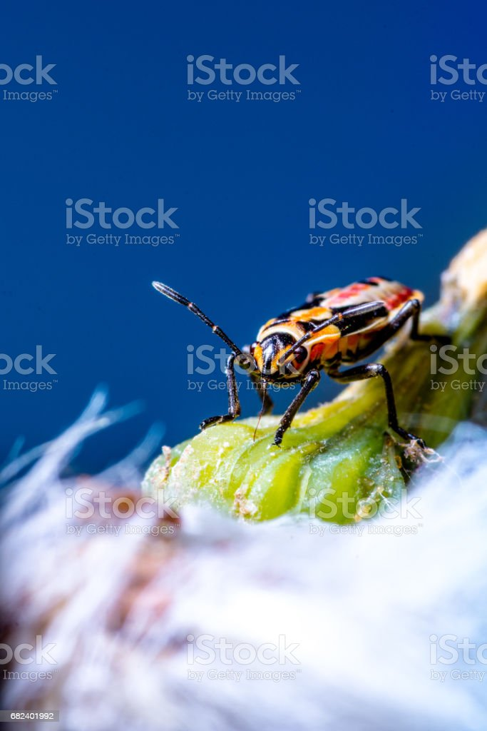 Abstract nature background of plant and insect royalty-free stock photo