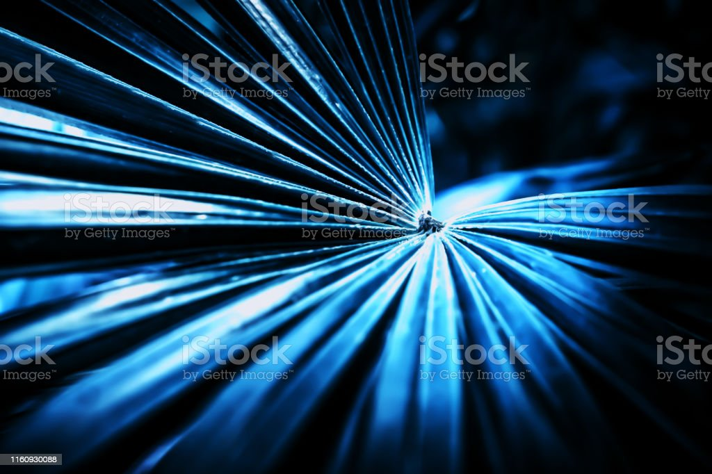 abstract nature background ,palm leavf texture with blue filter effect