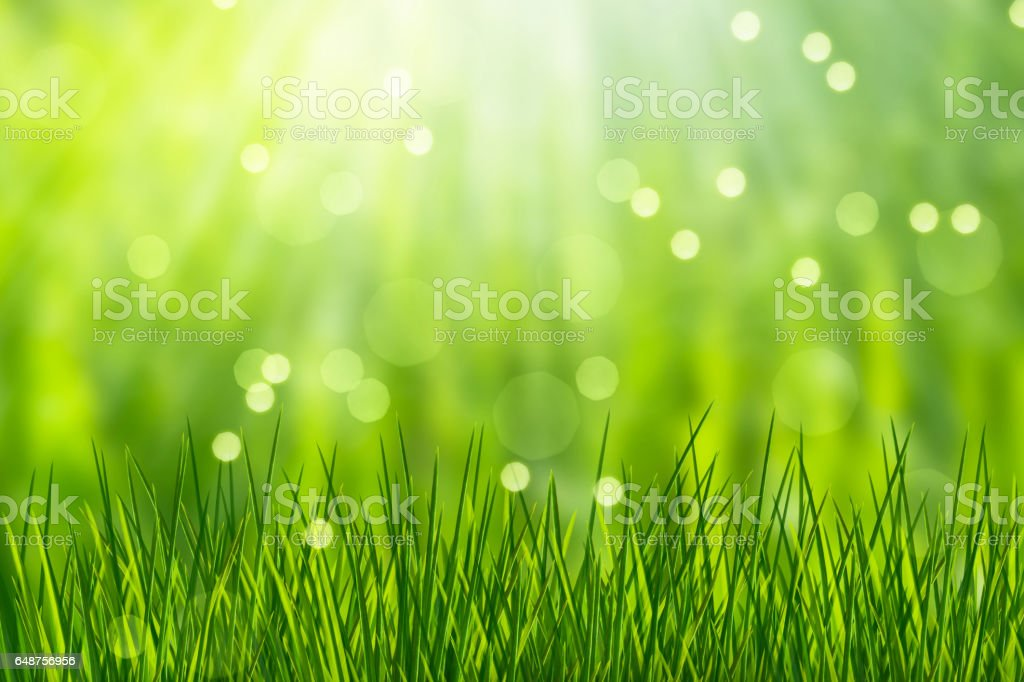 abstract nature background with grass blades stock photo