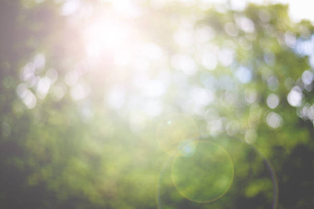 Abstract nature blur background and lens flare stock photo
