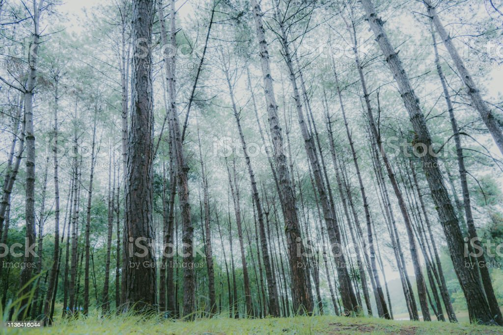 Abstract Nature Green Leaf Background And Beautiful Wallpaper Stock Photo Download Image Now