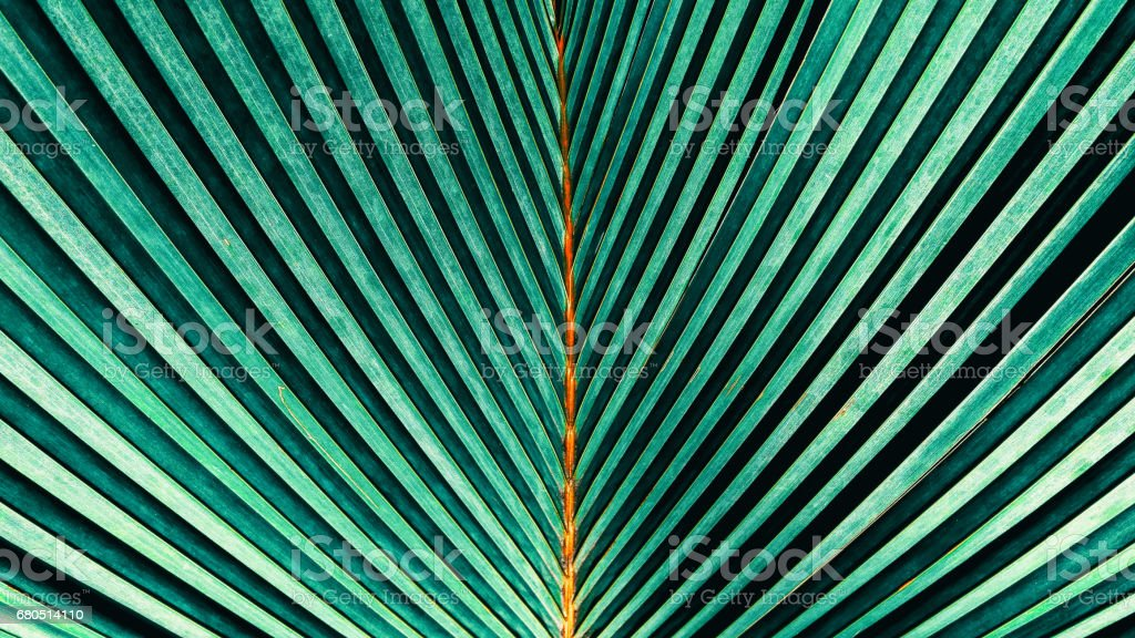 Abstract nature green texture backgrounds stock photo