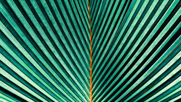 abstract nature green texture backgrounds - foliate pattern stock photos and pictures