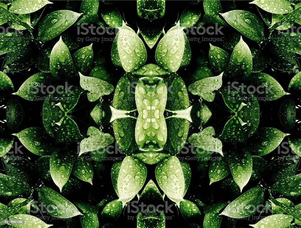 Abstract nature kaleidoscope of wet green leaves royalty free stockfoto