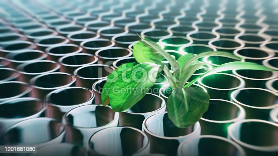 Abstract nature research - 3d rendered image of plant in test tube. Green fresh plants grown up in laboratory. Abstract background, nature, green, technology concept.