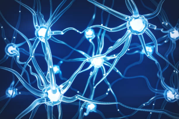 abstract neural network - nerve cell stock photos and pictures
