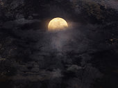 istock Abstract night sky with full moon for halloween background. 849024508