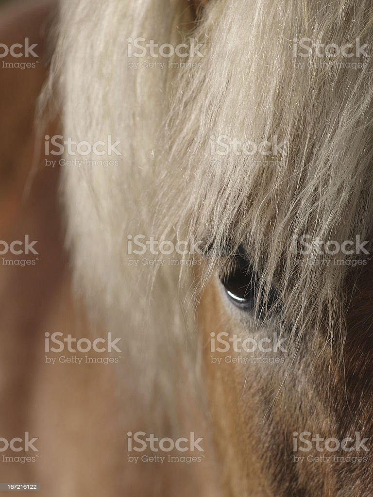 Abstract of a pretty horses face royalty-free stock photo