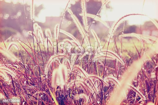 519188550 istock photo Abstract of flowers grass 484726646