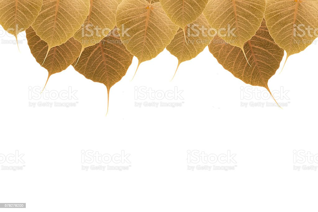 Abstract of pho leaf ( Bodhi Tree) background stock photo