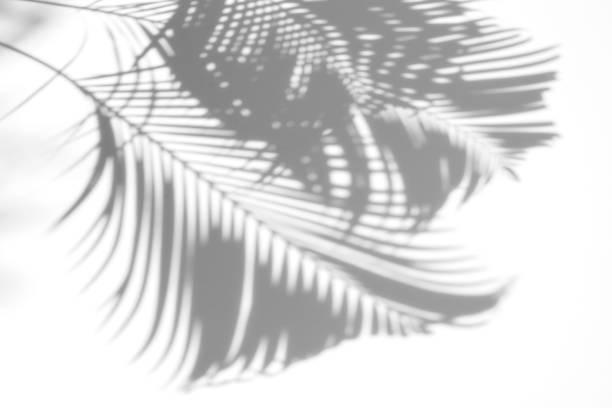 白い背景に影ヤシの抽象を残します。 ストックフォト