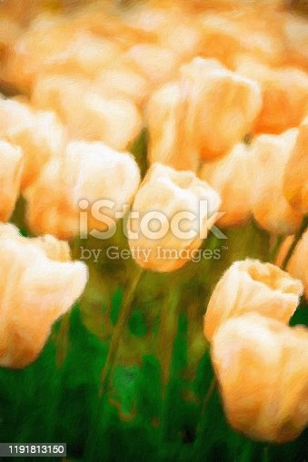 istock Abstract painted tulip art backgrounds. 1191813150