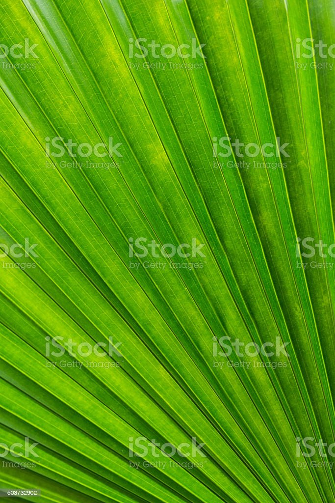 Abstract Palm Leaf Texture stock photo