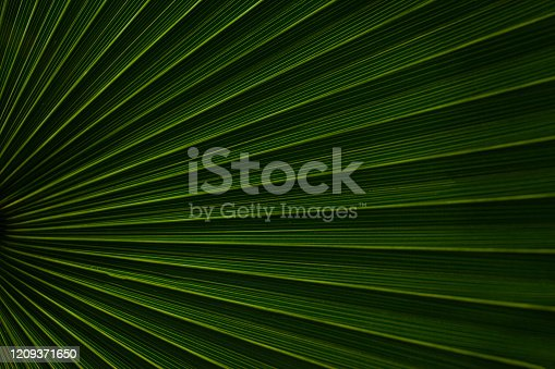 909846922 istock photo abstract palm leaf textures on dark blue tone, natural green background 1209371650