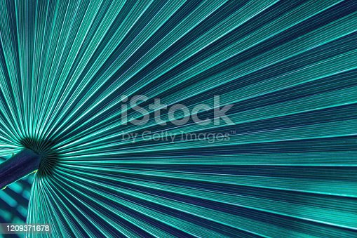 909846922 istock photo abstract palm leaf textures on dark blue tone, natural green background 1209371678