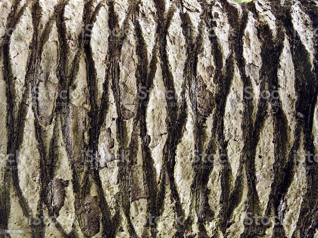 Abstract- Palm tree bark royalty-free stock photo